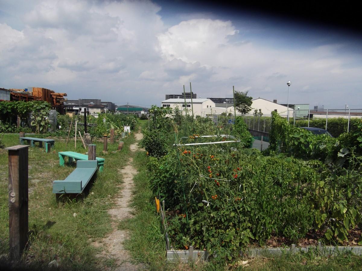貸し農園茨木