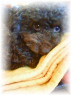 子犬の写真
