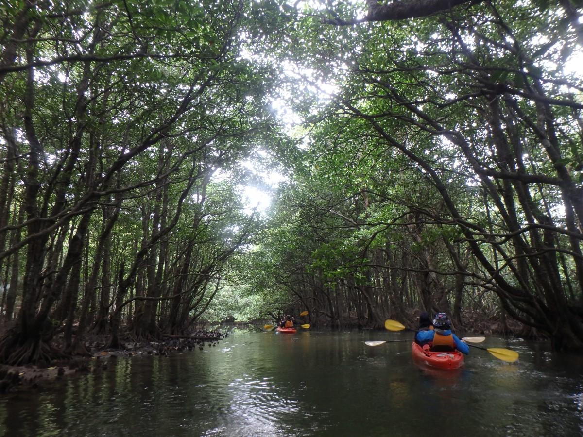 マングローブの川クーラ川