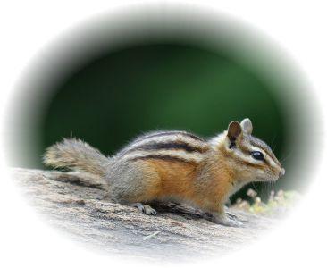 小動物のリスが木を歩いてる様子。