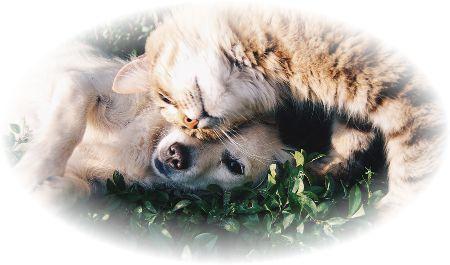 猫と犬がじゃれあって仲良く遊んでる様子。