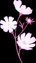 ピンク色のお花。