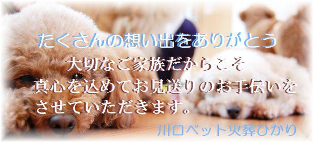 大切な家族だからこそ真心を込めてお見送りをいたします。埼玉県川口市の川口ペット火葬ひかり。