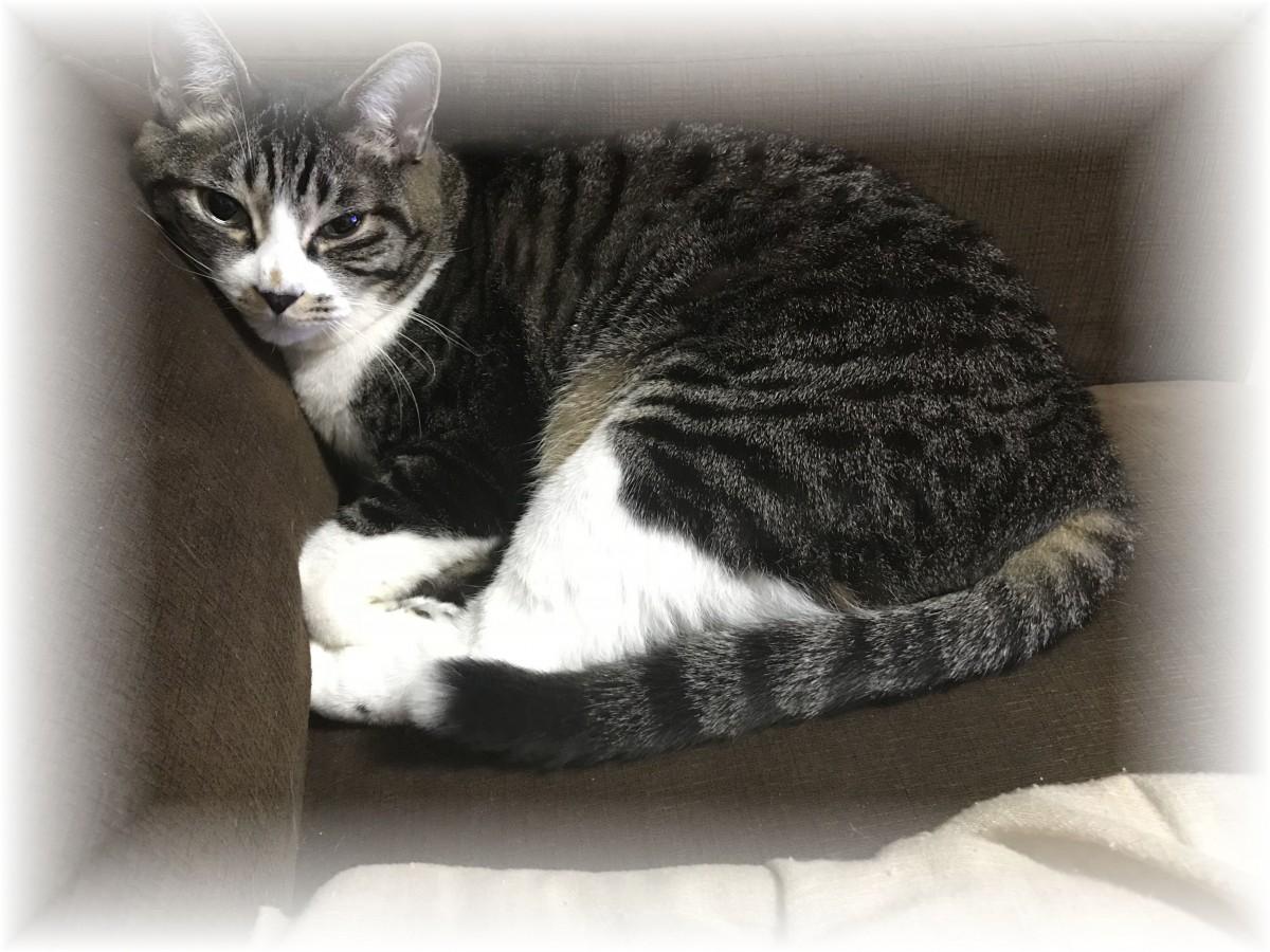 猫がソファーで休んでる様子です。