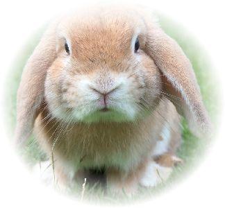 小動物のウサギが立っている様子。