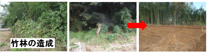 伐採 水戸市 伐採費用 伐採相場 業者 茨城県
